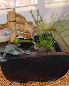 Learn how to create a successful water garden in a container from the gardening experts at HGTV.com.