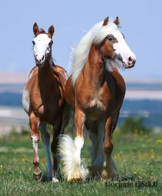 .One of the most ( Beautiful Horses ) in the World