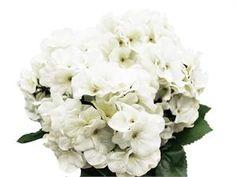 4 x White Hydrangea Bush | eFavorMart