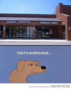 China Chef + Animal Hospital