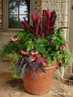 simply flowers containers potted flowerspotted plantsflower - Potted Plant Ideas For Patio