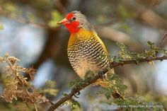 Melba Finch, Namibia South Africa