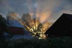 Sun exploding through a tree in Sweden - Imgur