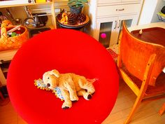 red chair,antique chair,ikea dog. Ikea Dog, Antique Chairs, Olympus, Digital Camera, Film, Antiques, Toys, Friends, Interior