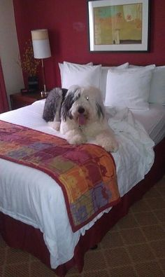 My Alfie at the Highlands Ranch, Colorado Residence Inn