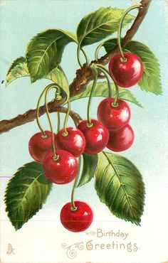 Vintage Illustrations Vintage - greetings with cherries hanging from branch from TuckDB Postcards Vintage Birthday Cards, Vintage Greeting Cards, Vintage Postcards, Fruit Painting, China Painting, Botanical Illustration, Botanical Prints, Vintage Pictures, Vintage Images