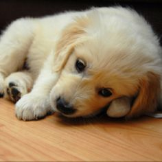 So adorable!! Little puppy on the floor