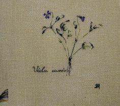 http://www.archive-host2.com/membres/images/1336321151/fleurs/Violas/t-et-c/tc-c.jpg