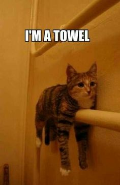 Funny pictures of animals posted every day. We're bringing you the best images of funny pets, weird and cute animals. Funny Animal Quotes, Cute Funny Animals, Cute Baby Animals, Cute Cats, Fluffy Animals, Funniest Animals, Animal Humour, Cute Animal Memes, Adorable Kittens
