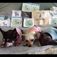 @extragr_am Roxie, Ainsley and Louie, all rescue dogs, and promoters of The Little Blue Dog! #rescue #dogs #chihuahuas #pets www.thelittlebluedog.com