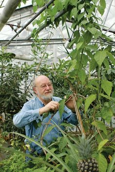 """Can ayahuasca cure addictions? -- Olivia LaVecchia interviews ethnopharmacologist Dennis McKenna in the Minneapolis City Pages. """"If we can bring together the best of shamanism and the best of psychotherapy, I think we can offer a new paradigm for healing,"""" says McKenna. """"What we're really trying to do here is revolutionize psychiatry."""""""