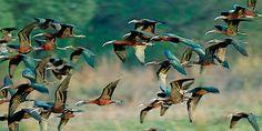 The Most #Popular #Bird #Sanctuaries in Kadamb Kunj Resort, #Bharatpur,#INDIA http://www.bharatpurbirdsanctuary.in/blog/the-most-popular-bird-sanctuaries-in-india/