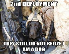 2nd deployment ~ Dog Humor Military