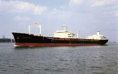 Chevron Naples