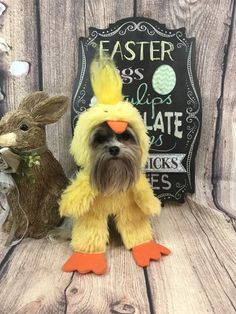 Excited to share this item from my shop: Easter chick dog costume for small breed dogs Bunny Costume, Costume Hats, Pet Costumes, Costume Shop, Easter Chick, Easter Bunny, Small Dog Breeds, Small Breed, Red Scarves