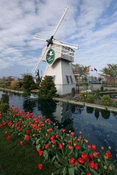 The windmill at Tulip Town: Skagit Valley Festival