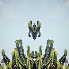 Flora Botanica. Photography by Magda Kolodziejczyk. Follow me on Instagram - mags28.