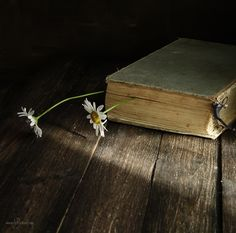 What I really like about the picture is the lighting. It's only a little area that has a light which I think looks really nice. I also like how the object that was being photographed was an old book which brings a different feel to the whole picture.