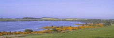 Fly fishing for wild brown trout on Loch Eye, near Tain and the route in Scotland. North Coast 500, East Coast, Trout Fishing, Fly Fishing, The Loch, Brown Trout, Scotland, Golf Courses, Scenery