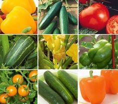 beginners veggie garden