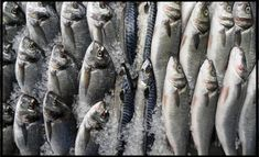 HOW TO START A FISH FARMING BUSINESS IN NIGERIA (DETAILED GUIDE) Catfish Farming, Mackerel Fish, Fish Feed, Farm Business, Types Of Fish