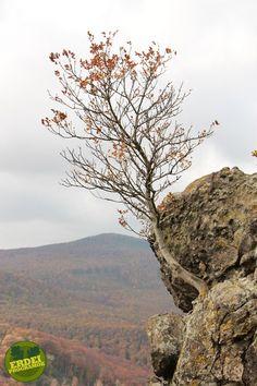 Vadálló-kövek, Visegrádi-hegység | Erdeiprogramok.hu - Élményekben gazdag magyar erdők Merida, Homeland, Hungary, Nature, Travel, Naturaleza, Viajes, Trips, Nature Illustration
