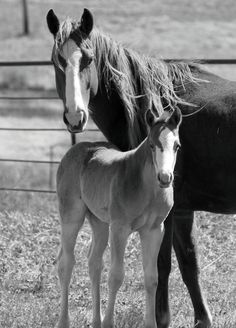 Some people take these creatures for advantage. Save these horses form Abuse and over working. -Molly