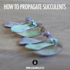 Plants 4 Basic Ways of Propagating Succulents – Leaf & Clay How To Choose The Perfect Retailer For Y