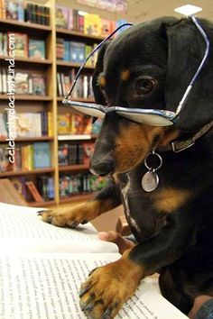 It says here that I should recieve multiple puppy treats a day and that baths are bad for weenie dogs.