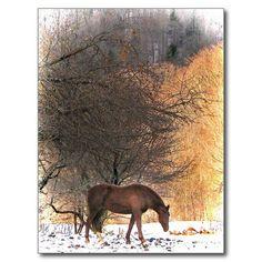 Horse in Winter 2015 Calendar Postcard