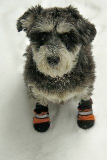 He does not look impressed with that fashion choice....orange booties??