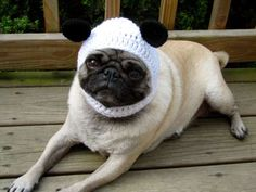 Adorable Canine Toppers - Sweethoots Dolls up Dogs with Cute Headgear (GALLERY)