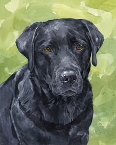 Black Lab watercolor - david scheirer
