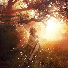 Fairy meadow.