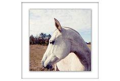 Elegant Horse Framed Giclée on OneKingsLane.com
