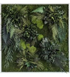 Moss Wall, Real Plants, Our Love, Herbs, Creative, Instagram Posts, Flowers, Urban, Interior