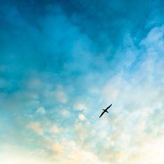 Bird Sky by ►CubaGallery, via Flickr