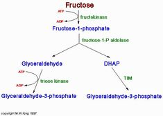 Food-Info.net : Fructose intolerance malabsorption and HFI