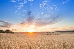 Image result for irish fields of wheat Fields, Irish, Waves, Clouds, Outdoor, Image, Outdoors, Irish People, Outdoor Games