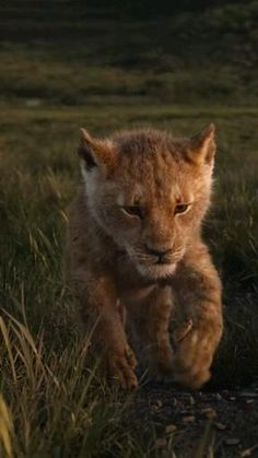Lion King Pictures, Lion Images, Beautiful Photos Of Nature, Animals Beautiful, Cute Baby Animals, Funny Animals, Lion Live Wallpaper, Cartoon Songs, Le Roi Lion