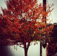 Outono e seus últimos dias. #outono #natureza #vida