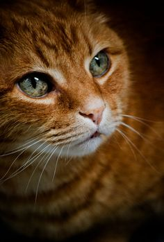 Check this out > Most Beautiful Cats Pictures :-D