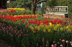 City of Portsmouth - Prescott Park. A great attraction for site and the history of Portsmouth. During the summer there is concerts, theater, movies and more. It's all within walking distance of all the great downtown shops and Strawberry Bank Museum. Amazing Gardens, Beautiful Gardens, Weekend In New England, Prescott Park, Summer Fun, Summer 2014, White Mountains, Grand Hotel, Portsmouth