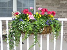 Container Planting: Gotta love hearty geraniums, ivy, Yellow mini pansies, white bacopa, and purple Lobelia. Our planters need flowers that can withstand wind. This is my favorite over the years.