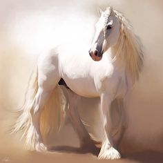 Gorgeous White Friesian    Mmm...the color is called grey and Don't think that's…