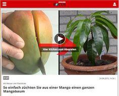 """Mr. Greens Welt: Mister Greens Welt bei Focus online """"Mango"""""""