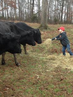 Bryson Mathis helping out with the farm chores! Do you have a photo to share? Send it to Lauren@tncattle.org