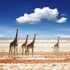 @Easyvoyage - Namibia  #myeasyvoyage #namibia #etosha #desert #giraffes #safari #passionpassport #wildnature #livenature #beautifulplaces #neverstopexploring #wanderlust #travel #wonderful_places #blue Hotels-live.com via https://www.instagram