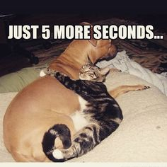 #catsanddogs
