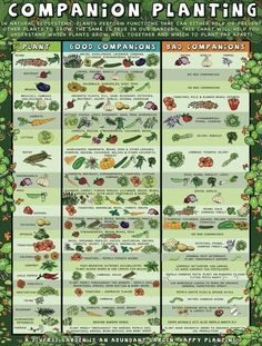 Companion Gardening Companion planting guide for organic gardening. - Companion Planting Guide for Garden Tower Project. Learn more for any of the various topics that will help you bring homegrown organic produce to your table Veg Garden, Vegetable Garden Design, Easy Garden, Garden Plants, Vegetable Gardening, Veggie Gardens, Planting Plants, Garden Planting Layout, Beginner Vegetable Garden